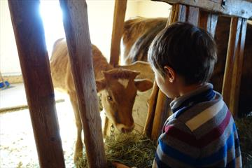 Visiting the animals in the barn